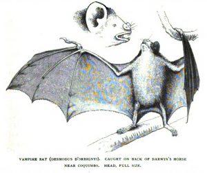 Darwin_bat