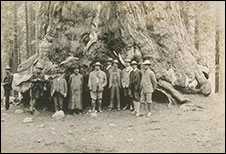 9 men standing in front of a redwood tree